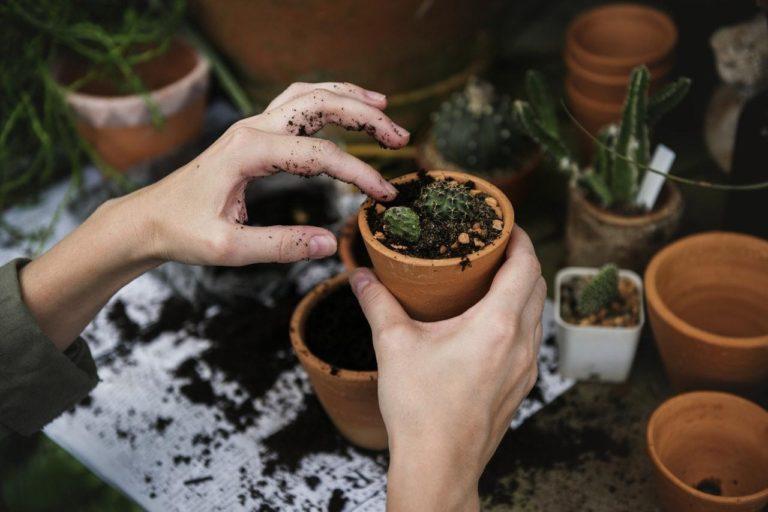 Venkovský vzhled domácnosti podpoří truhlíky s bylinkami