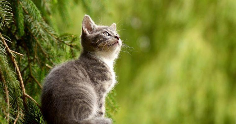 Škrabadla a odpočívadla pro kočky – jaká je nezbytná výbava pro kočku?