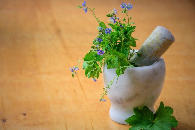 Jaké bylinky vysadit na zahradě k dochucování masových jídel?